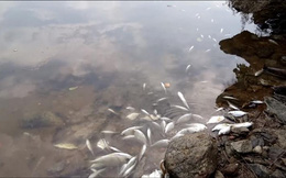 Vùng biển Chân Mây: Cá chết nhiều ở khu vực có dải nước màu vàng