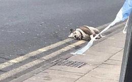 Điên cuồng tấn công trẻ nhỏ giữa trung tâm thành phố Anh, đàn chó bị cảnh sát vũ trang bắn chết