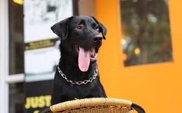 Hành trình tìm đường về của Phô Mai - chú chó lông đen đi lạc mất 1 năm: Có những nơi luôn là nhà!