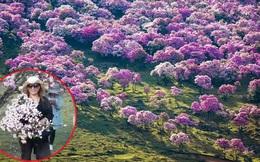 Trung Quốc: Khách tham quan hồn nhiên bẻ cành cây nướng thịt giữa rừng hoa đỗ quyên tuyệt đẹp
