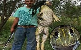 Con ếch khổng lồ dài hơn 1m khiến nhiều người nghĩ là đồ giả