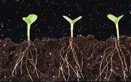 Trung Quốc lên kế hoạch trồng khoai tây và nuôi giun trên Mặt trăng vào năm 2018