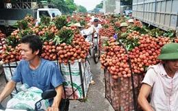 Bắc Giang: Người dân bán được giá, hơn 6.000 tấn vải được xuất sang Trung Quốc