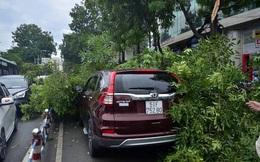 Cây xanh ngã đè ô tô, đường Sài Gòn ùn tắc trong cơn mưa chiều