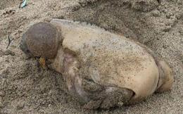 Sinh vật 2 bướu không mắt khổng lồ trôi dạt vào bờ biển khiến người dân hoảng sợ