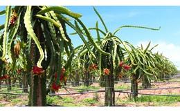 Mới bước chân vào lĩnh vực trái cây, vì sao bầu Đức ngay lập tức trồng tới 17 loại cây khác nhau?