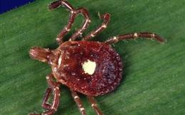 Kỳ lạ thay, nếu bị loài bọ này cắn thì bạn sẽ biến thành người ăn chay