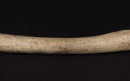 Chỉ vì mẩu xương hóa thạch này, lịch sử con người đang bị buộc phải viết lại