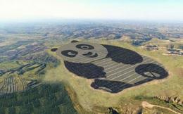 Trung Quốc xây dựng trang trại năng lượng mặt trời độc nhất vô nhị trên thế giới, hình gấu trúc
