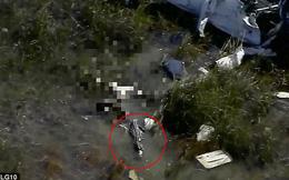 Rơi xuống vùng đầm lầy sau khi vụ tai nạn máy bay, nạn nhân bị cá sấu xông tới ăn thịt