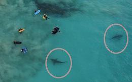 Thót tim khoảnh khắc hàng trăm con cá mập khổng lồ lởn vởn ngay cạnh nhóm học sinh đi bơi