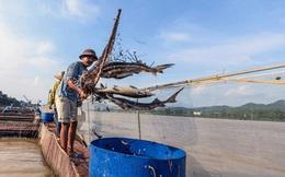 Cá chết do thủy điện xả lũ, các hộ dân được bồi thường