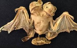 Tìm thấy con dơi mọc hai đầu kinh dị ở Brazil