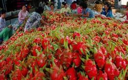 Xuất khẩu rau quả có thể đạt 3,6 tỷ USD