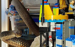 Kiểm tra phòng con, cha mẹ tá hỏa khi thấy rắn cực độc bò lồm ngồm trong đống đồ chơi