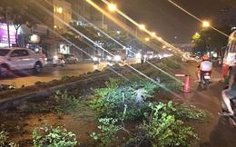 Nhổ bỏ hàng loạt cây xanh trên dải phân cách: Chủ tịch quận ở Hà Nội nói gì?