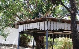 Phú Yên thu hồi dự án tổ hợp khách sạn Mường Thanh của đại gia Lê Thanh Thản