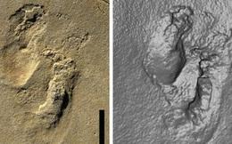 Phát hiện dấu chân người 5,7 triệu năm có nguy cơ viết lại lịch sử về nguồn gốc loài người