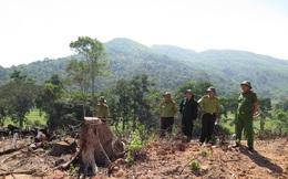 Thủ tướng chỉ đạo điều tra vụ phá rừng tự nhiên ở Bình Định