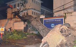 Cây cổ thụ bật gốc đè nát tường trường Đại học Sài Gòn