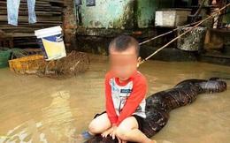 Vụ bé 3 tuổi cưỡi trăn khủng đùa nghịch trong nước lũ: Xử phạt gia đình nuôi trăn