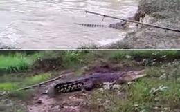 Cá sấu khổng lồ khiến dân làng khiếp vía
