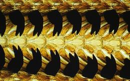 Sở hữu tới 15.000 chiếc răng - đây mới là loài sinh vật nhiều răng nhất thế giới