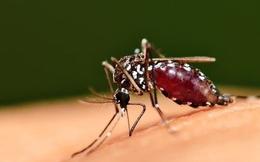 Cách bay ngược đời của muỗi khiến chúng trở nên cực kỳ đáng sợ