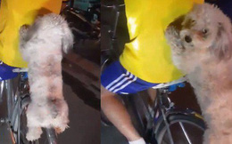 Clip: Nam thanh niên cho chó ngồi lơ lửng trên vành xe đạp rồi đi lượn phố gây tranh cãi lớn