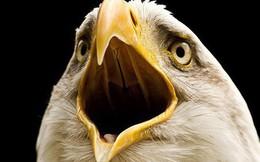 Vì sao chim không có răng và câu trả lời thú vị đến bất ngờ