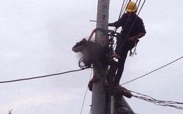 Đồng Nai: Thợ điện bị điện giật tử vong khi đang sửa đường đây