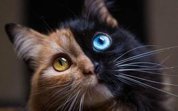 Trông như kết quả của một cuộc tình ngang trái, hóa ra cô mèo đặc biệt này gặp vấn đề về gen