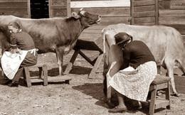 Chuyện cô hàng sữa và hũ sữa bò: Có những ý tưởng rất hay nhưng nó chỉ là... trên giấy