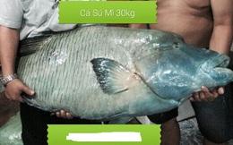 Cá sống cả trăm mét dưới đáy biển, giá 2,3 triệu đồng/kg chỉ nhà giàu mới dám mua