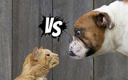 Chó hay mèo thông minh hơn? Cuối cùng khoa học cũng có kết luận rồi!