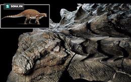 """Giải mã hóa thạch quái vật mệnh danh """"xe tăng 4 chân"""": Lớp """"áo giáp"""" còn nguyên vẹn"""