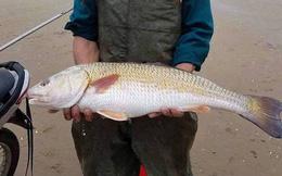 Ngư dân câu được cá lạ nghi là sủ vàng, có người trả 450 triệu đồng không bán