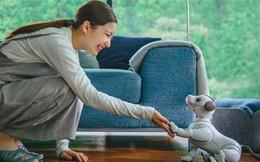 Chó robot AIBO sẽ lấy lại danh tiếng cho Sony?