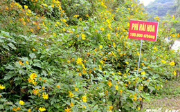 Cận cảnh loài hoa rừng có phí hái 100.000 đồng một bông