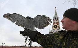 Biệt đội chim săn mồi bảo vệ Điện Kremlin