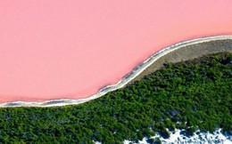 Giải mã hiện tượng đẹp lạ lùng: Nước hồ bỗng dưng chuyển sang hồng phấn!