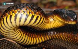 Bí ẩn hòn đảo có hàng trăm con rắn hổ cực độc bị mù: Nhà làm phim BBC giải mã thành công