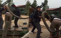 """Kiểm lâm nghi có người mang rắn hổ mang chúa đến thả rồi bắt lại để """"tạo sự kiện"""""""
