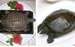 """Súp rùa sống - món ăn kinh dị và tàn nhẫn """"nức tiếng"""" Trung Quốc"""
