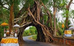 Cây lẻ bóng, cây dự trữ nước cho dân làng: Những loài cây kỳ lạ hay 'kiệt tác' của tự nhiên