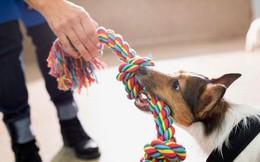 5 việc nhất định cần phải thực hiện nếu không may bị chó tấn công
