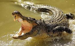 Lấy nước bất cẩn, thiếu nữ suýt bị cá sấu đoạt mạng