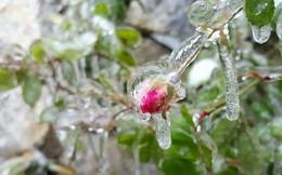 Miền Bắc sẽ lạnh - 5 độ C, dự báo có băng giá