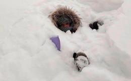 Nếu chịu lạnh kém, bạn không nên tới thành phố với nhiệt độ -55 độ C, tuyết ngập cả đầu người này