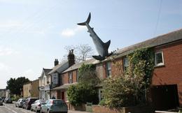 Nhìn tưởng con cá mập trên trời rơi xuống, đến gần mọi người mới vỡ lẽ ra sự thật